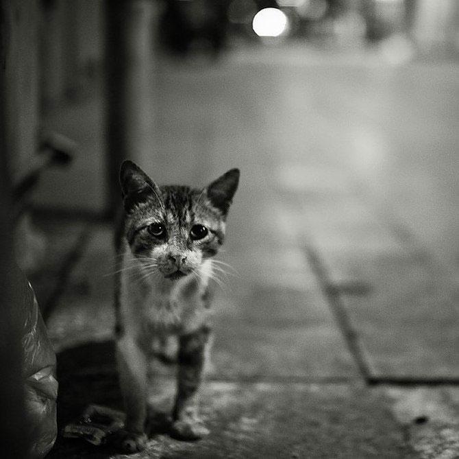 Rusul, pisicile si Turcia - Poza 2