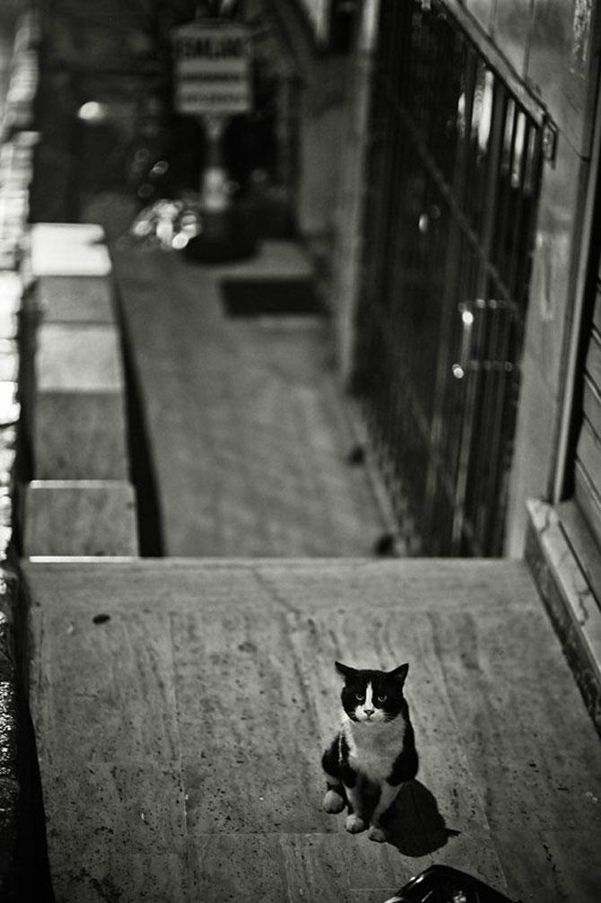 Rusul, pisicile si Turcia - Poza 3