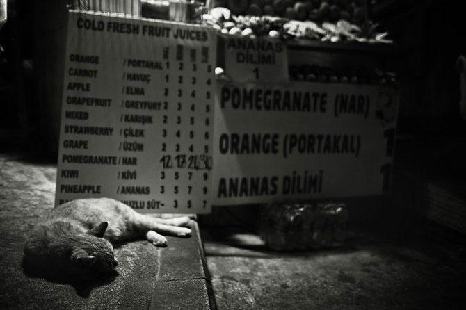 Rusul, pisicile si Turcia - Poza 5