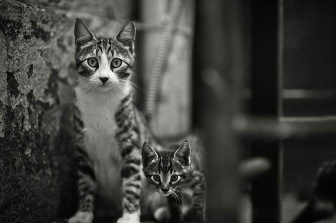 Rusul, pisicile si Turcia - Poza 6