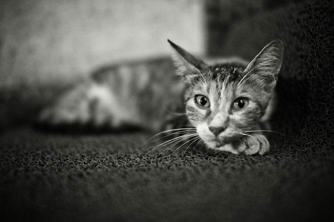 Rusul, pisicile si Turcia - Poza 7