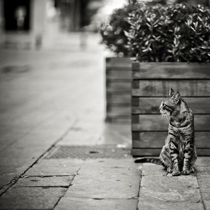 Rusul, pisicile si Turcia - Poza 9