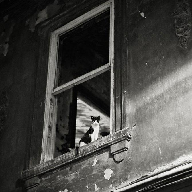 Rusul, pisicile si Turcia - Poza 10