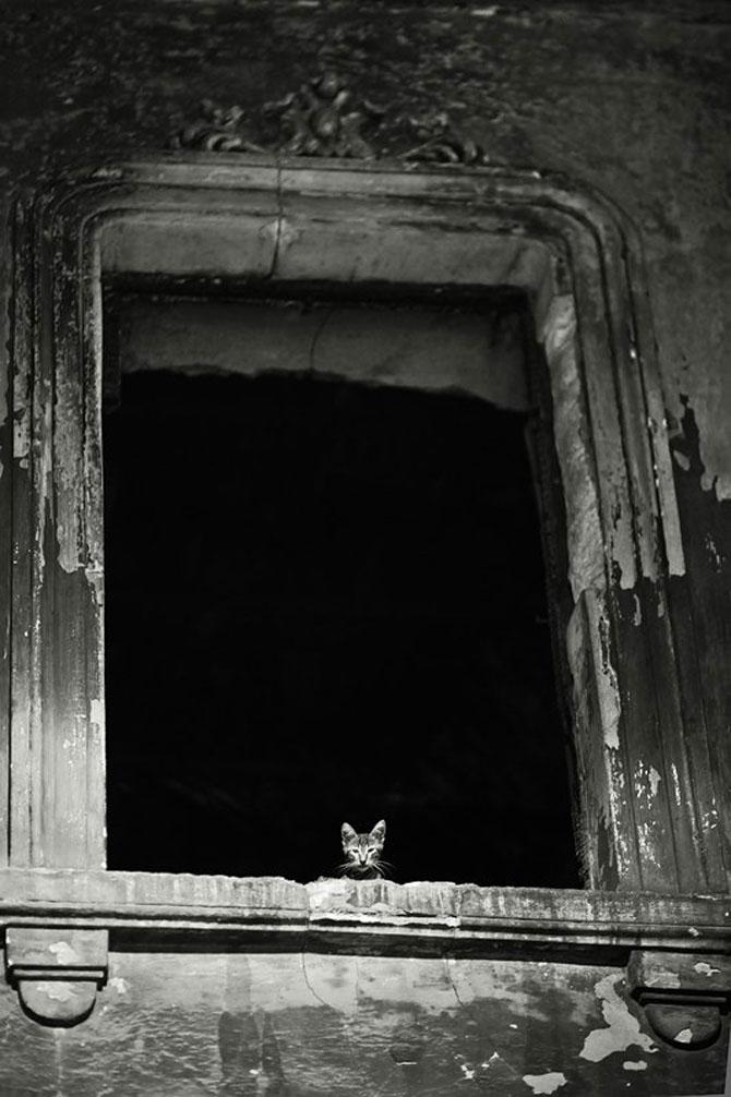 Rusul, pisicile si Turcia - Poza 11