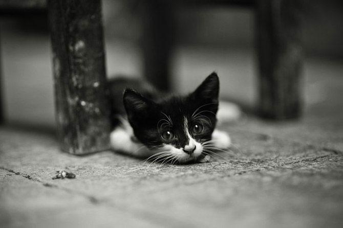Rusul, pisicile si Turcia - Poza 13