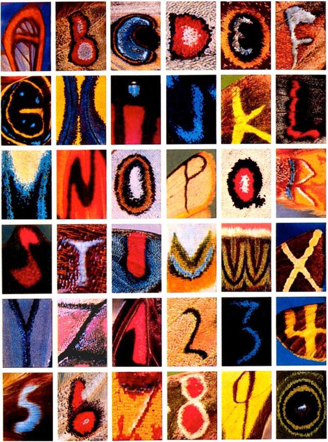 Alfabet pe aripi de fluture - Poza 1
