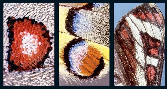 Alfabet pe aripi de fluture - Poza 2