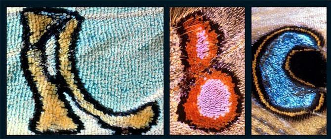 Alfabet pe aripi de fluture - Poza 3