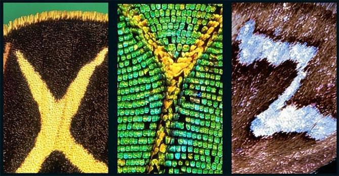 Alfabet pe aripi de fluture - Poza 5