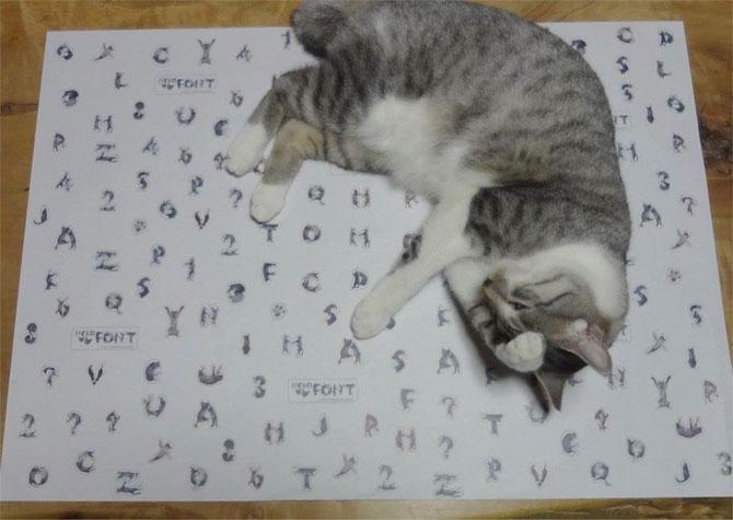 Alfabetul din pisici, de la NekoFont - Poza 3