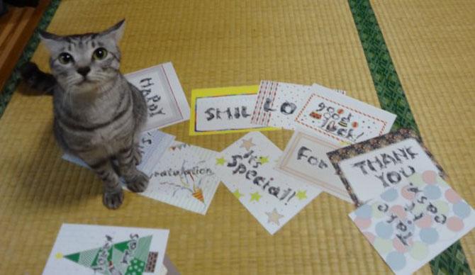 Alfabetul din pisici, de la NekoFont - Poza 4