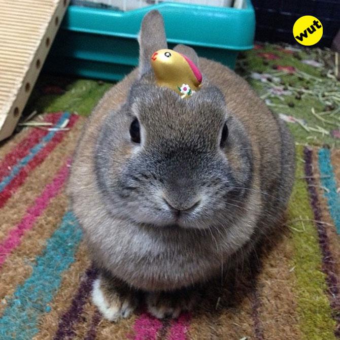 12 animale simpatice pozate cu Instagram - Poza 1