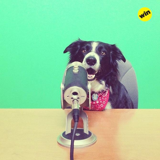12 animale simpatice pozate cu Instagram - Poza 2