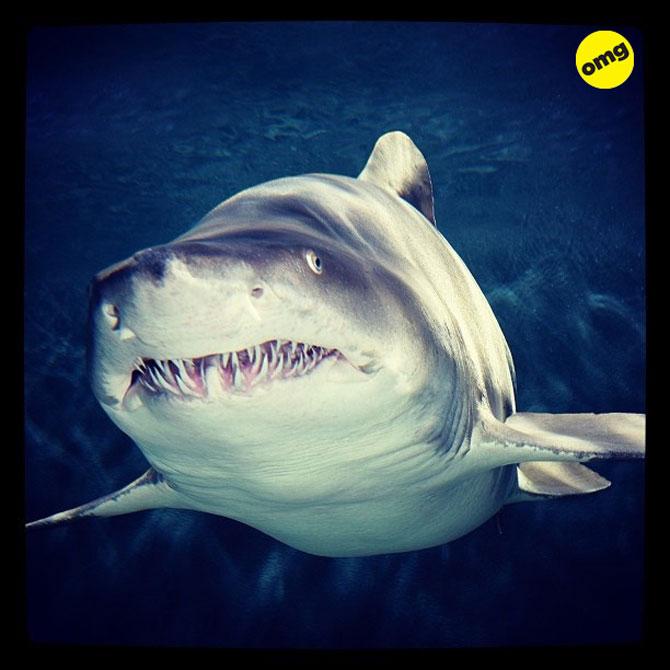 12 animale simpatice pozate cu Instagram - Poza 3