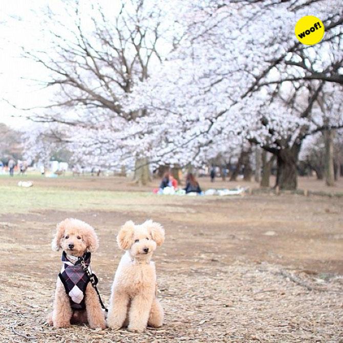 12 animale simpatice pozate cu Instagram - Poza 7