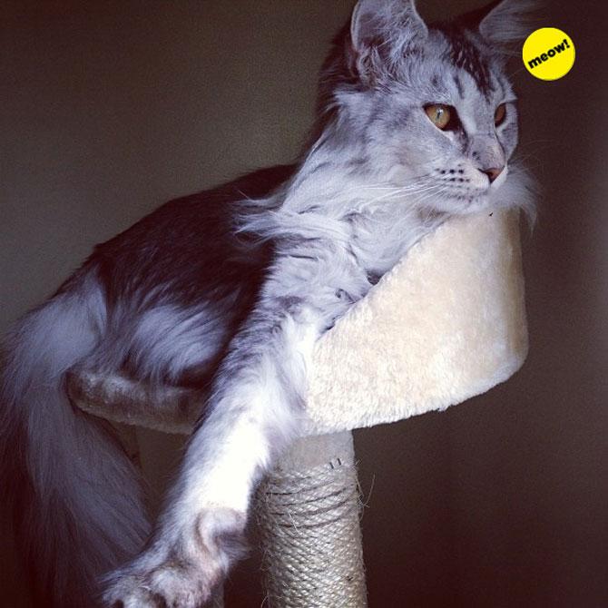 12 animale simpatice pozate cu Instagram - Poza 8