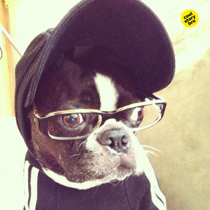 12 animale simpatice pozate cu Instagram - Poza 9