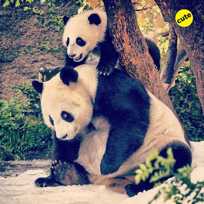 12 animale simpatice pozate cu Instagram - Poza 10