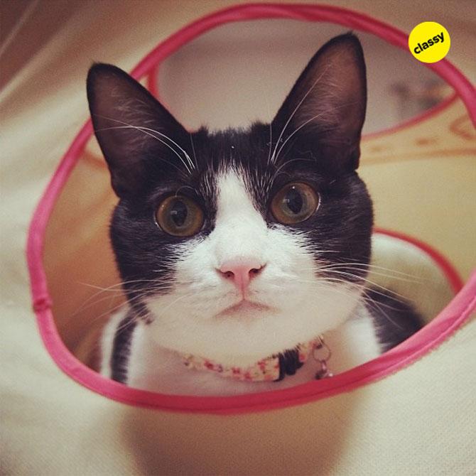 12 animale simpatice pozate cu Instagram - Poza 11