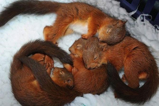 Animalute care dorm unele pe altele - Poza 1