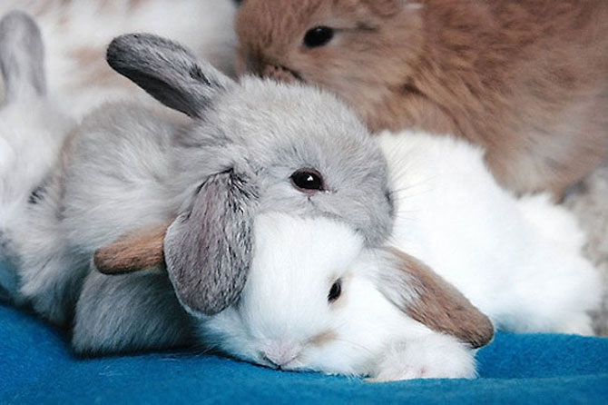 Animalute care dorm unele pe altele - Poza 2