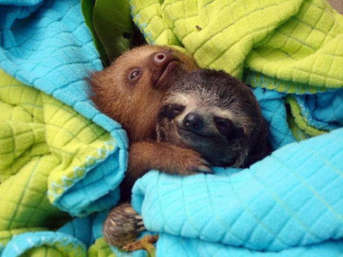 Animalute care dorm unele pe altele - Poza 3
