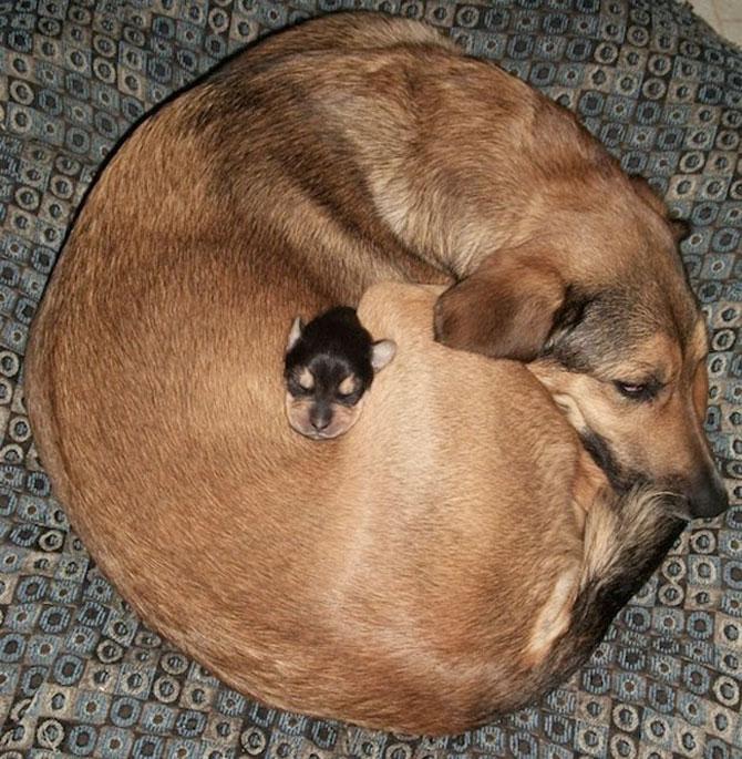 Animalute care dorm unele pe altele - Poza 5