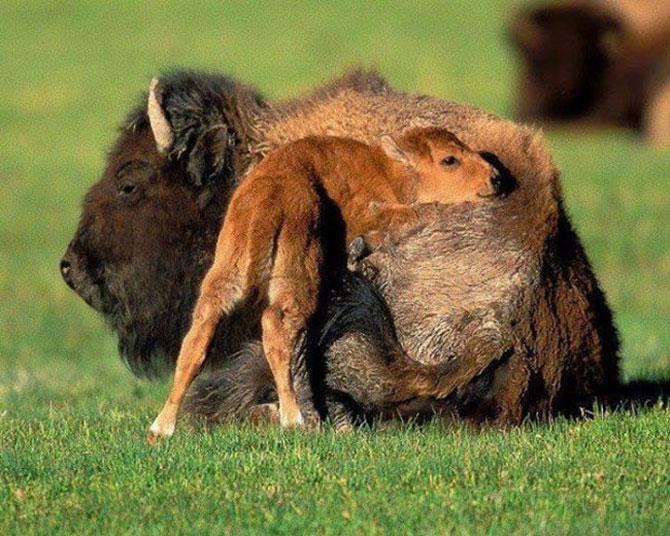 Animalute care dorm unele pe altele - Poza 6
