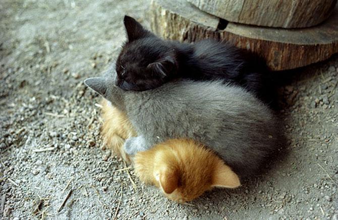 Animalute care dorm unele pe altele - Poza 8