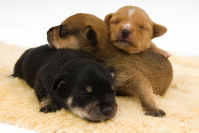 Animalute care dorm unele pe altele - Poza 9