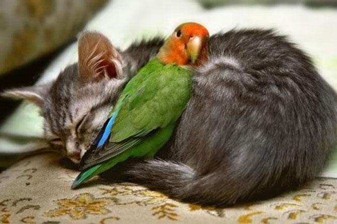 Animalute care dorm unele pe altele - Poza 10