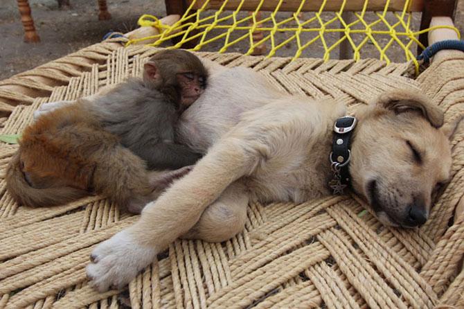 Animalute care dorm unele pe altele - Poza 11