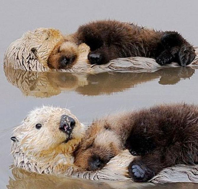 Animalute care dorm unele pe altele - Poza 12