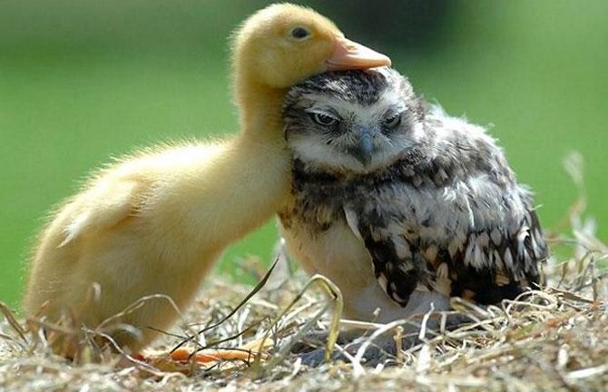 15 poze cu animale si imbratisari - Poza 1