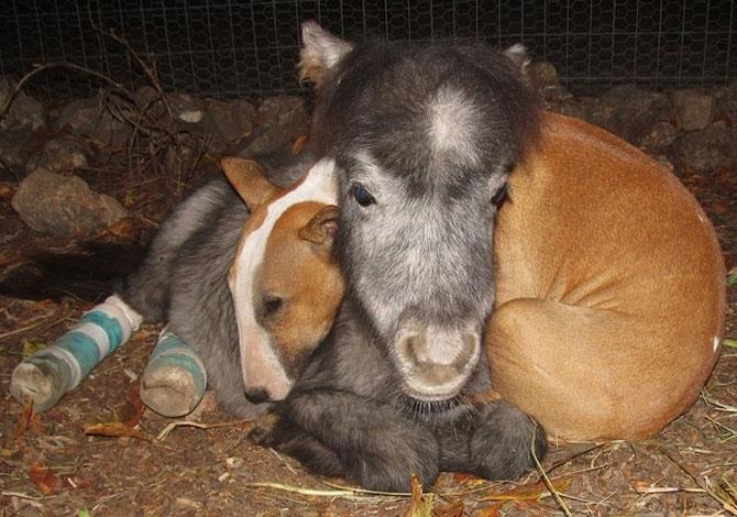 15 poze cu animale si imbratisari - Poza 3