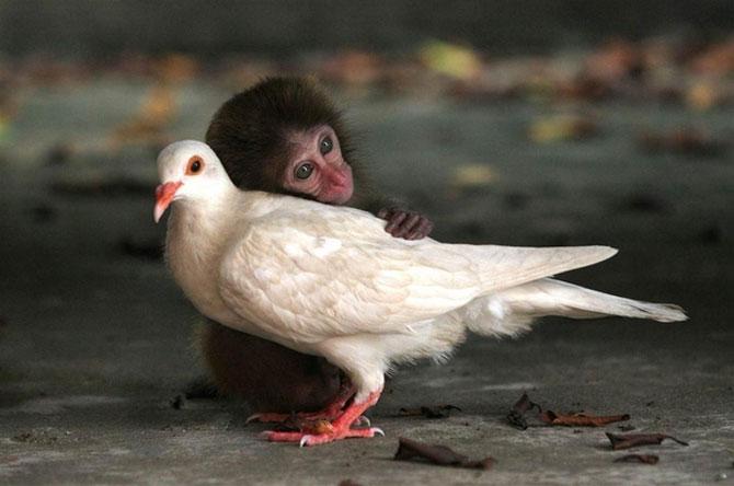 15 poze cu animale si imbratisari - Poza 5