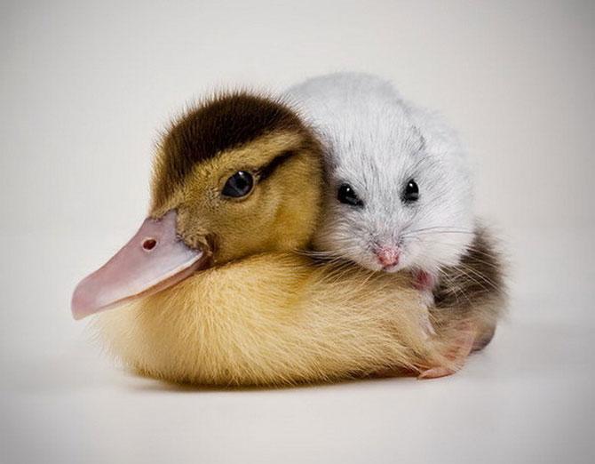 15 poze cu animale si imbratisari - Poza 8