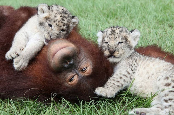 15 poze cu animale si imbratisari - Poza 9