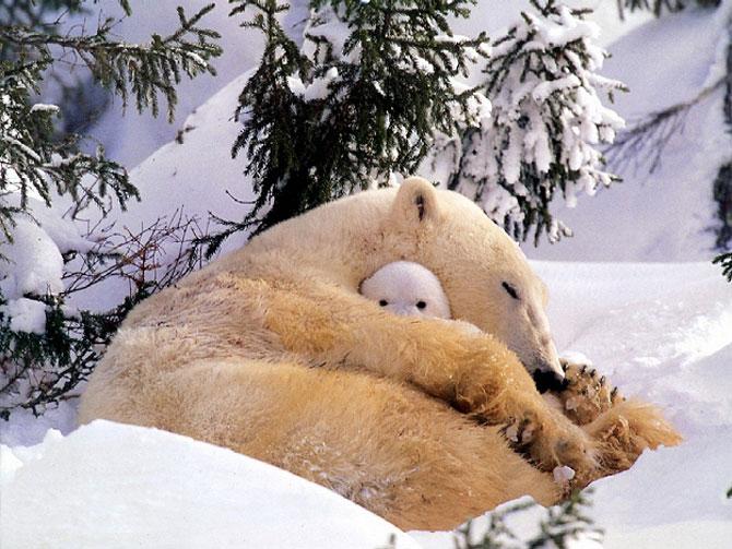 15 poze cu animale si imbratisari - Poza 12
