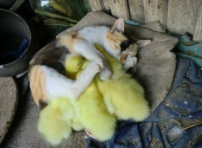 15 poze cu animale si imbratisari - Poza 14