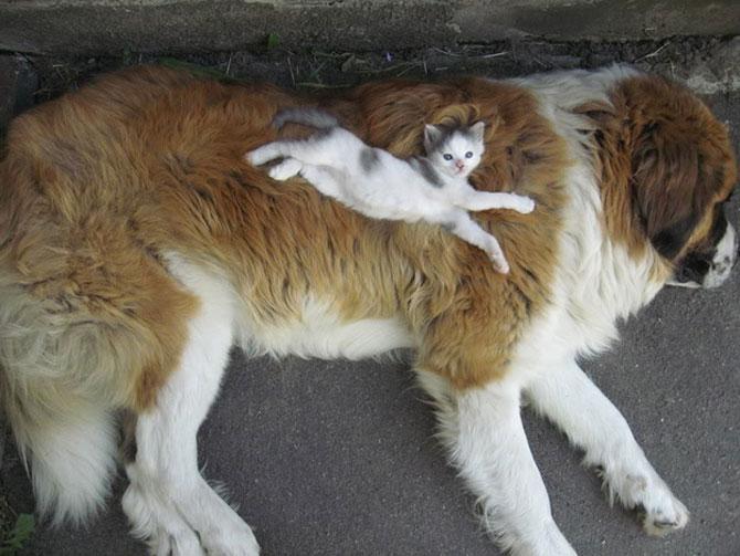 15 poze cu animale si imbratisari - Poza 15
