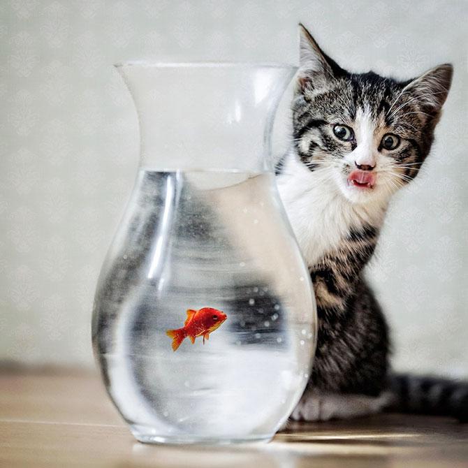 Cele mai simpatice animale de pe 500px - Poza 5