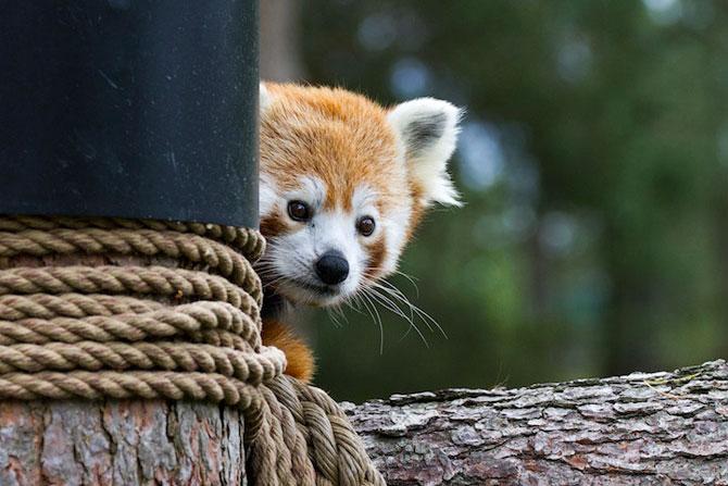 Cele mai simpatice animale de pe 500px - Poza 7