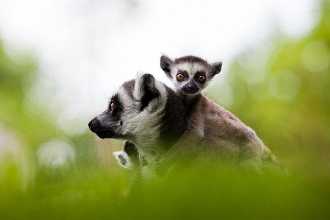 Cele mai simpatice animale de pe 500px - Poza 8