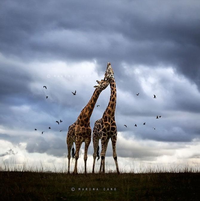 Cele mai simpatice animale de pe 500px - Poza 10