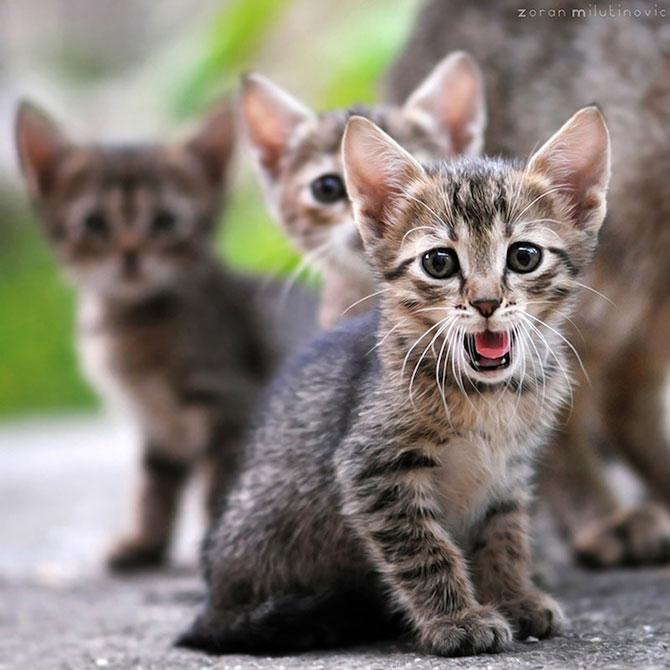Cele mai simpatice animale de pe 500px - Poza 11