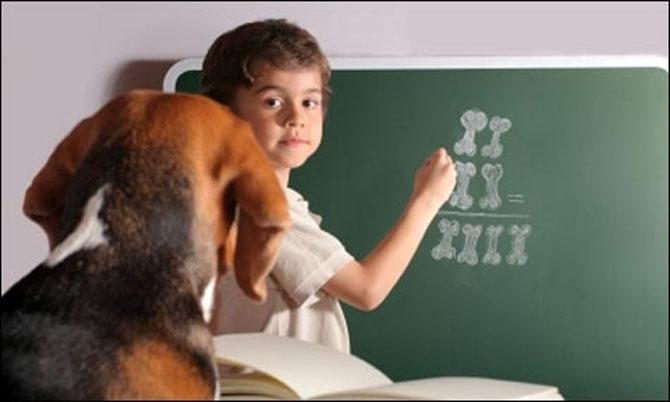 Animale simpatice in prima zi de scoala