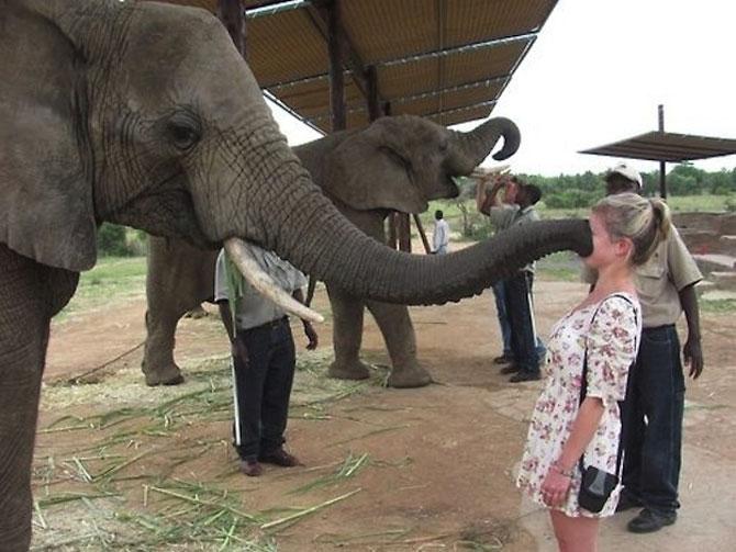 10 animale prea prietenoase - Poza 5