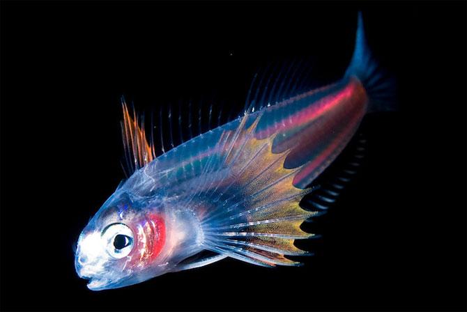 Fascinatia adancurilor: Animale marine fosforescente - Poza 3