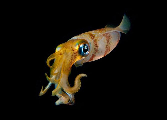 Fascinatia adancurilor: Animale marine fosforescente - Poza 7